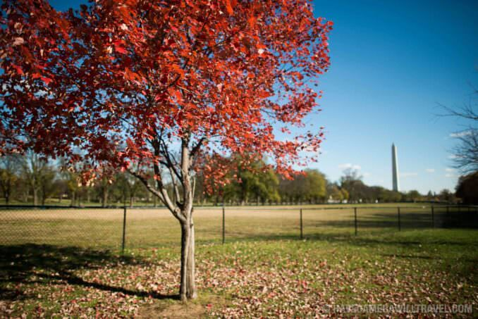 Autumn Leaves on the National Mall in Washington DC