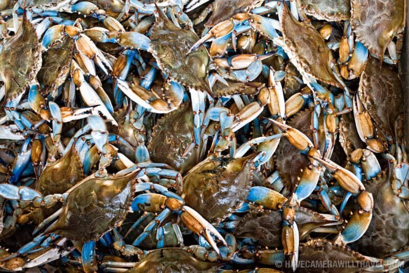 Blue Crabs from the Chesapeake Bay