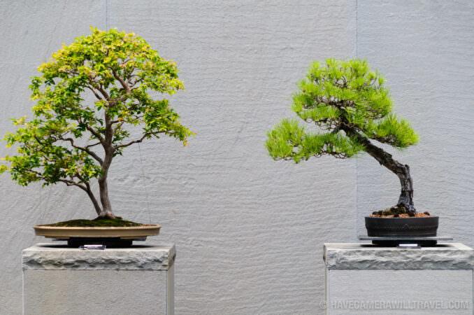 Bonsai at the National Arboretum