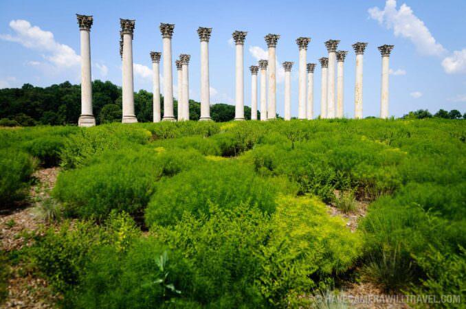 Capitol Columns at the United States National Arboretum