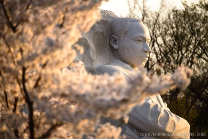Cherry Blossoms at the MLK Memorial
