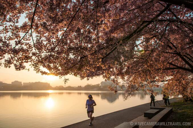 Early Morning at the Cherry Blossoms in Washington DC
