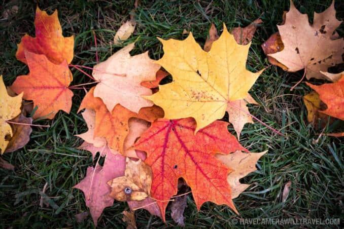 Fall Colors in Virginia
