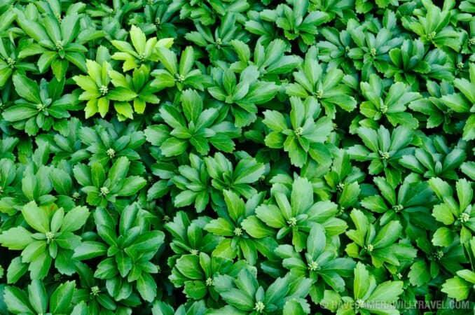 Green leaves at National Arboretum