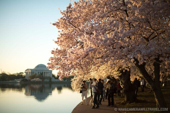 Jefferson Memorial and Cherry Blossoms - April 12, 2015