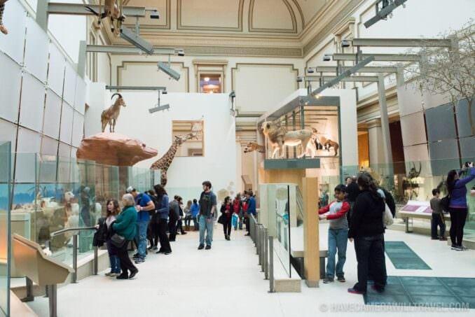 Mammals Hall at the Smithsonian National History of Natural History
