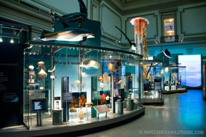 Marine Exhibit at the Smithsonian National History of Natural History
