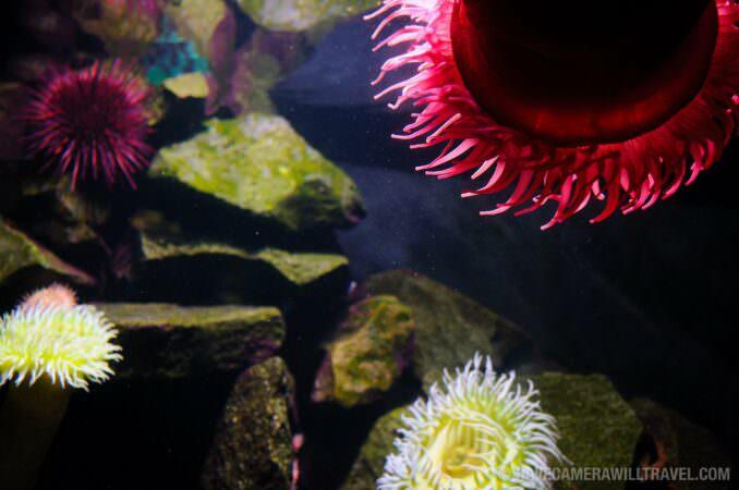 Photo of Anemones at the National Aquarium