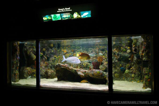 Photo of Marine Sanctuary Exhibit at the National Aquarium