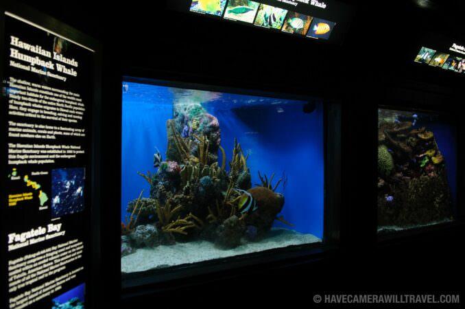 Photo of National Aquarium Exhibit