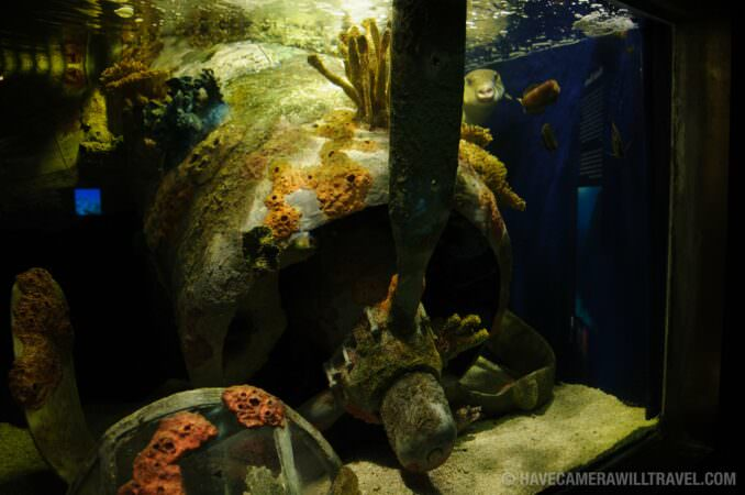 Photo of National Aquarium Plane Wreckage
