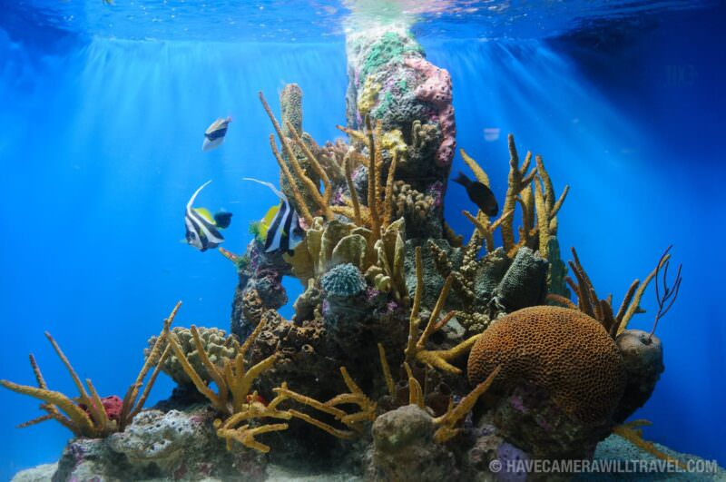 Photo of National Aquarium Tropical Reef