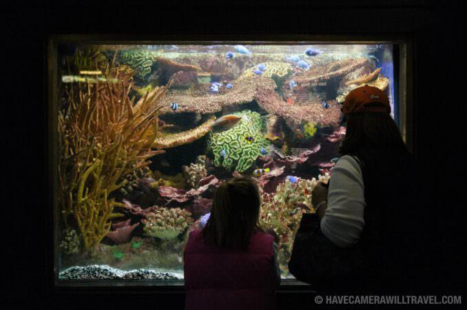 Photo of National Aquarium Visitors