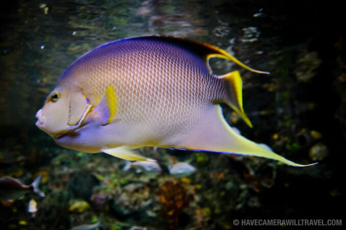 Photo of Reef Fish National Aquarium
