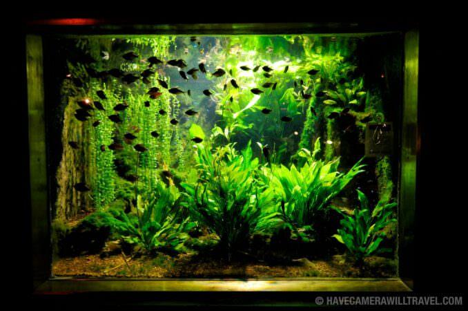 Photo of Small fish at the National Aquarium