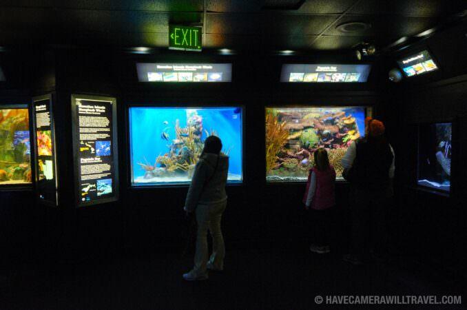 Photo of Tourists at National Aquarium