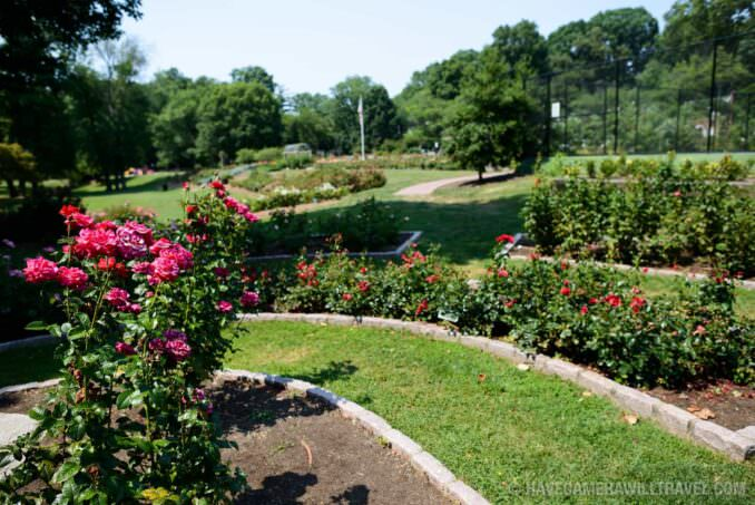 Rose Garden in Arlington Virginia flower Beds