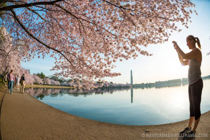 Taking Photos of Cherry Blossoms in Washington DC