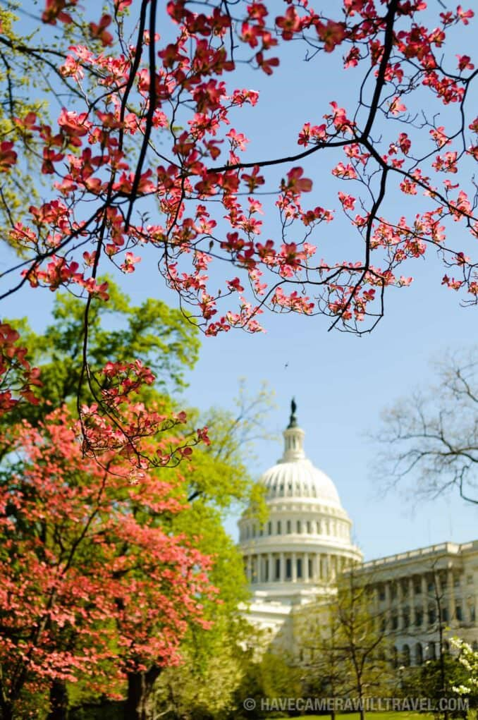 US Capitol Building with Spring Flowers
