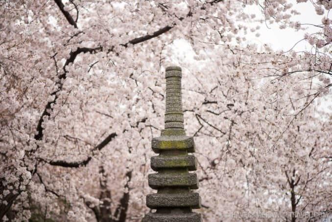 Washington DC Cherry Blossoms 2017 - March 28