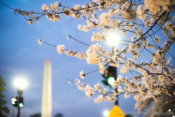 Washington DC Cherry Blossoms - March 25, 2016