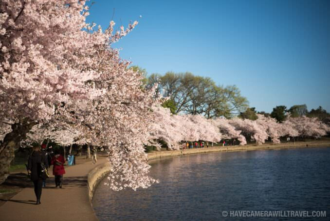 Washington DC Cherry Blossoms - March 29, 2016